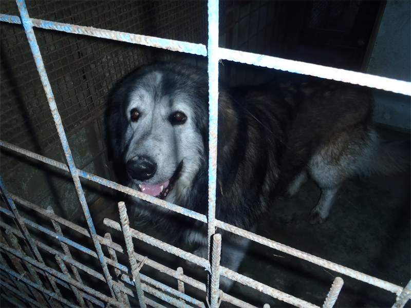 Pes nalezen 22.3.2012, 06:00 hod. v ul. Družstevní