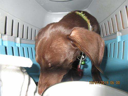 Pes nalezený dne 15. 01. 2019 v 05:30 hod., Husovo náměstí, Štětí (uPenny Marketu)